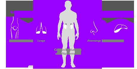 Cortisolbildung in den Nebennieren